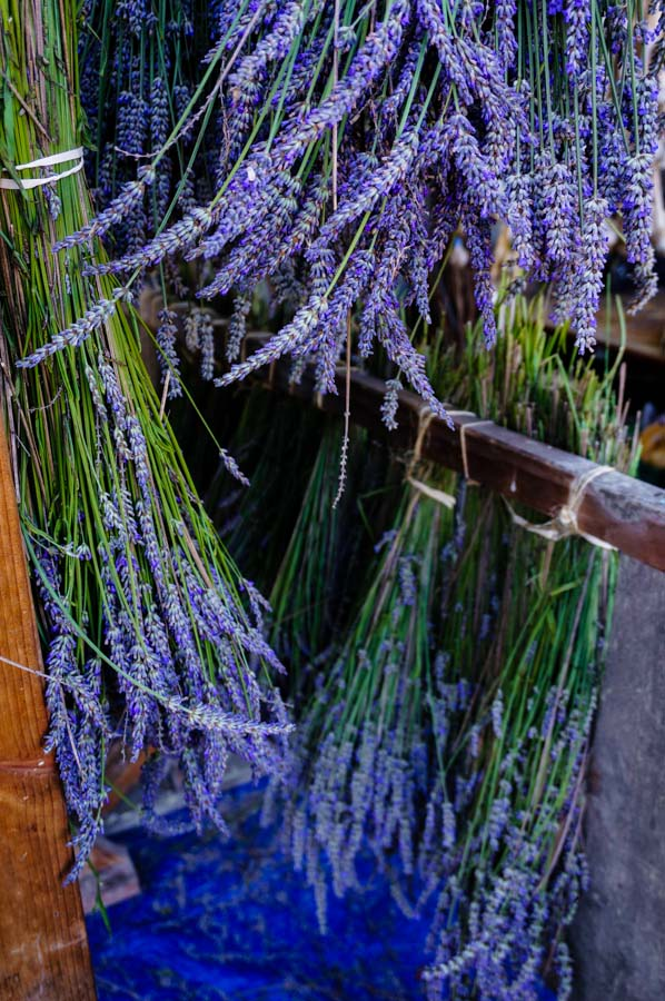 Herbs: Medicinal, Culinary, and Dye Plants - Barbolian Fields