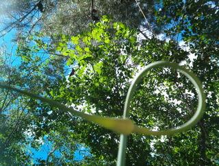 Garlic Scape Reaches Skyward in a Graceful Curl