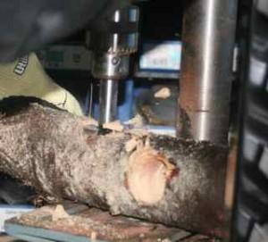 Drilling holes in log to make bird feeder