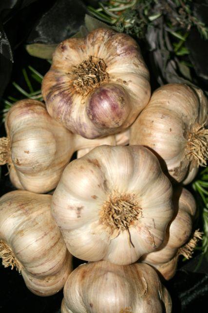Transylvanian Garlic Bulbs - an Artichoke Variety