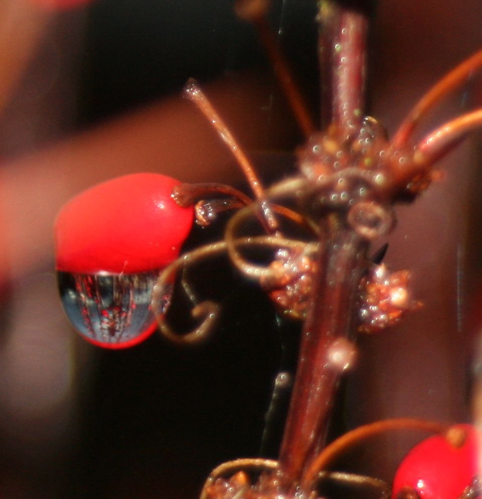 In a dewdrop, the universe