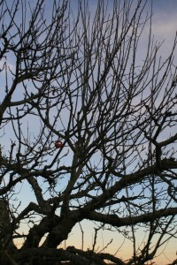 This old apple tree obviously needs pruning