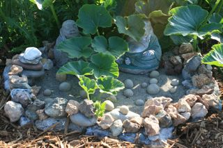 Sweet Mama squash climbs over Buddhas (Barbolian Fields photo)