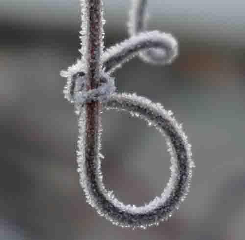 Grapevine noose