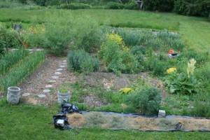 Beginning Forest Garden