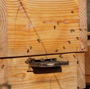 Beehive in February