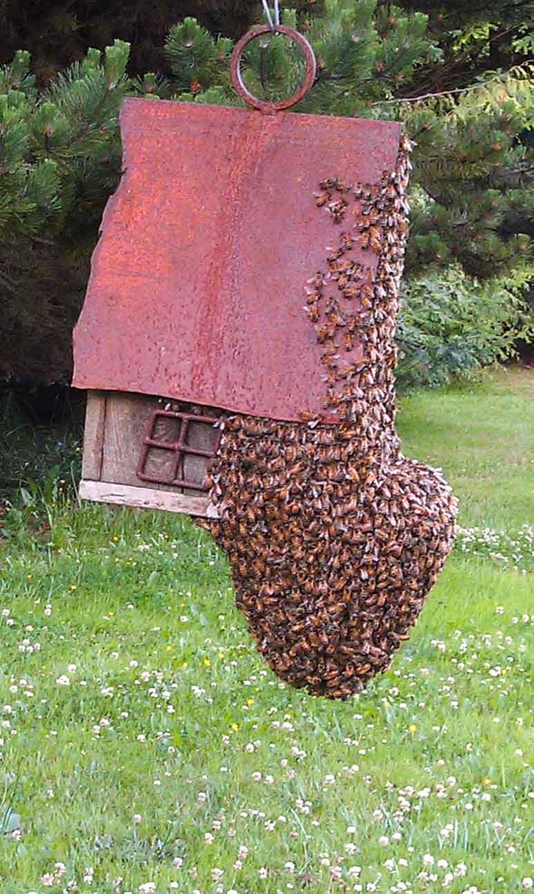 honeybee swarm on birdhouse