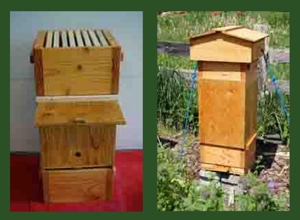 Features of honeybee swarm traps