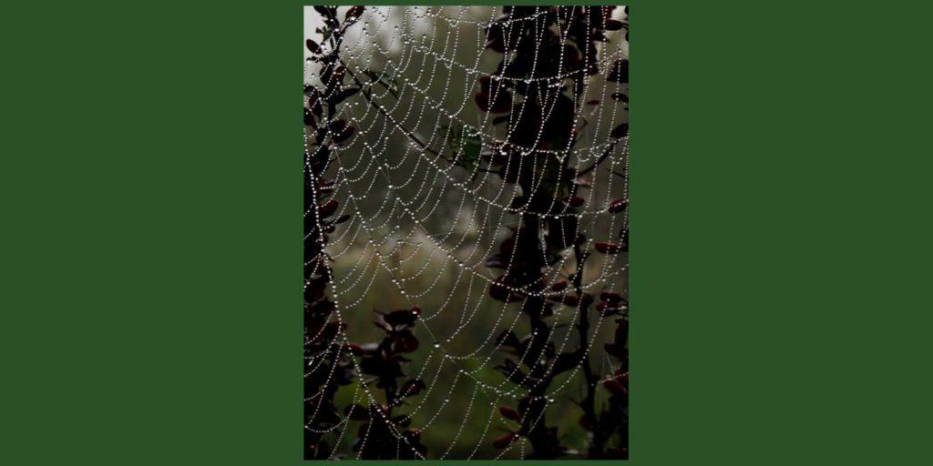 spiderweb construction ladders