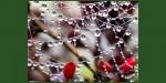 Spiderweb around berries