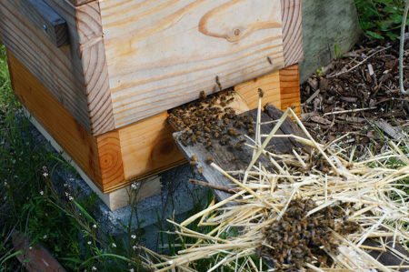 Bees move in
