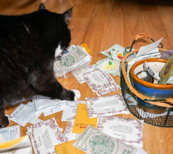 Cat rearranges seed order