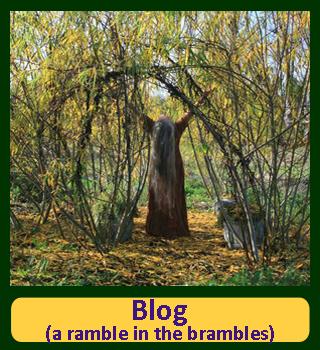 Barbolian Fields Blog (A Ramble in the Brambles)