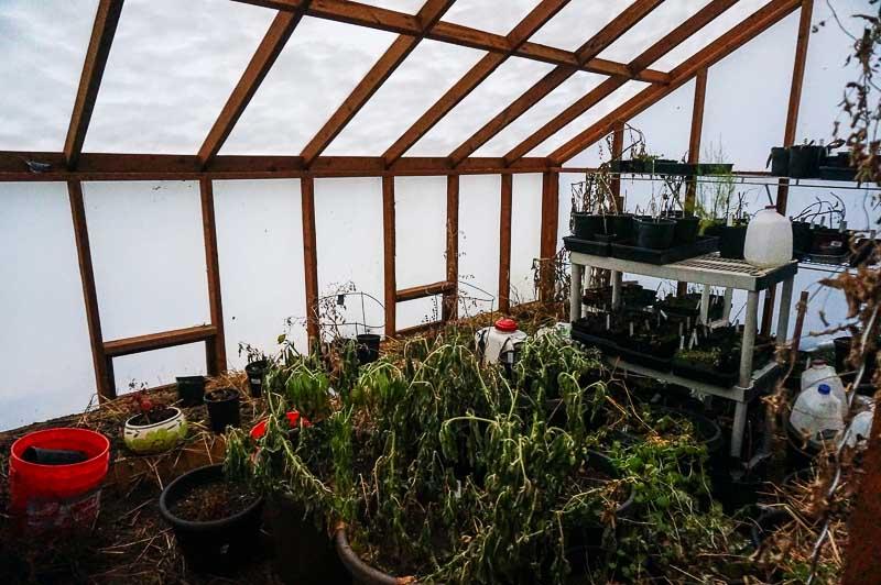 Solexx Greenhouse in January