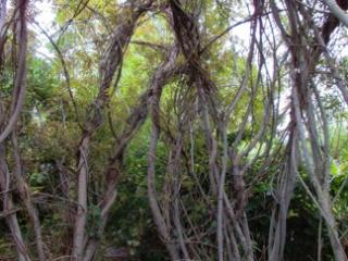 Willow room in September