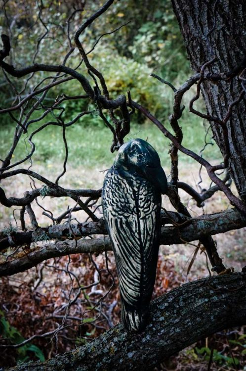 A raven awaits on the crooked branch