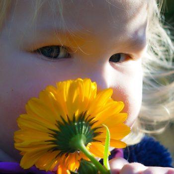 Toddler with calendula