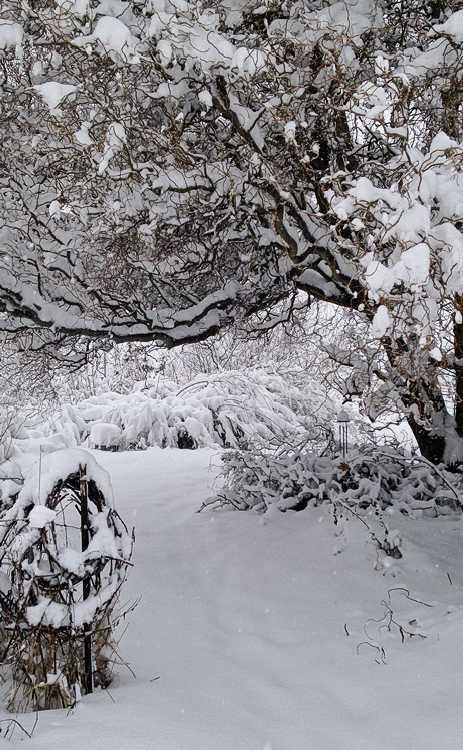 Under snow, the garden is transformed