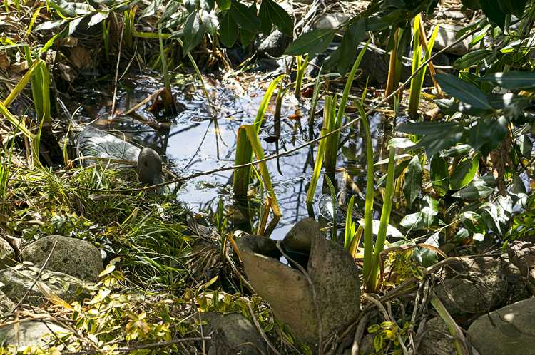 March pond