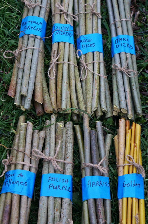 8 Varieties of Willow Cuttings