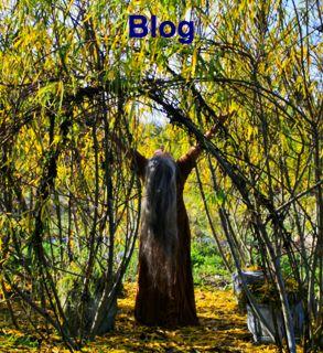 Barbolian Blog