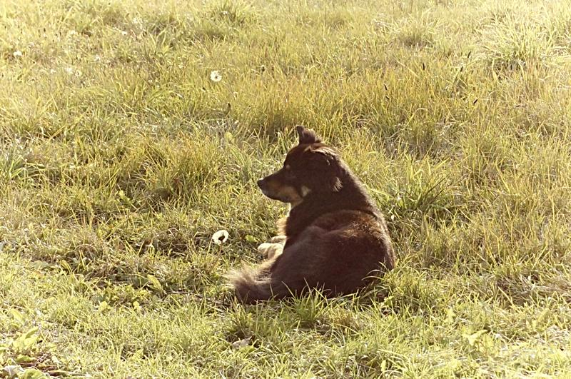 Barkley in his Field - profound sense of place