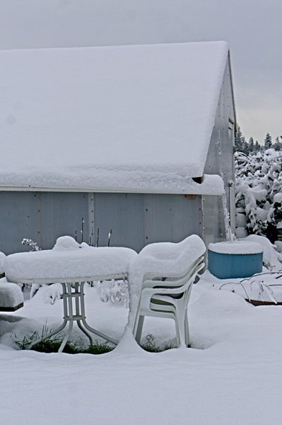 Winter Greenhouse Gardening: Strategies for Survival in an Unheated Space