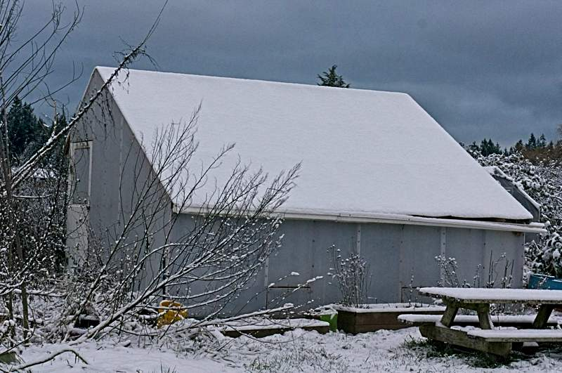 January snow_winter greenhouse