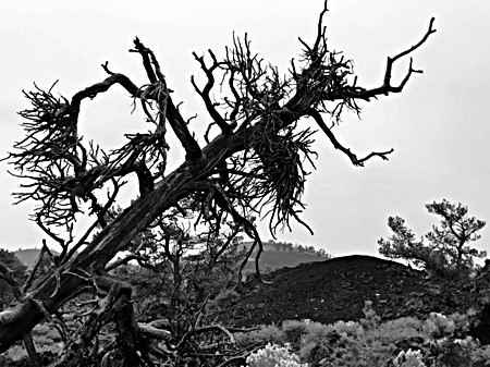 Dead Tree Falling_Craters of the Moon