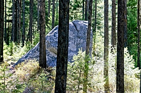Large Rocks in Forest_MT