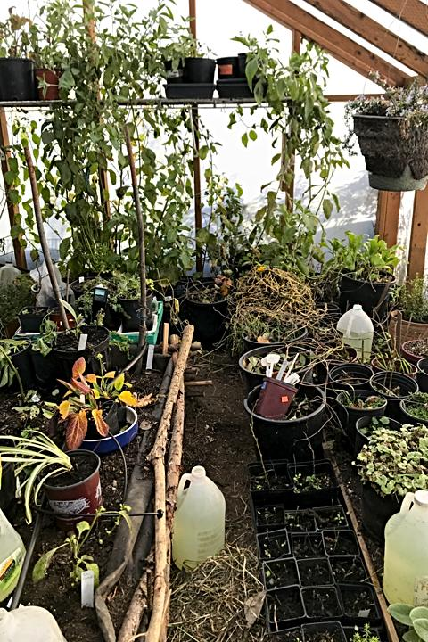 Crowded greenhouse - can't walk in here