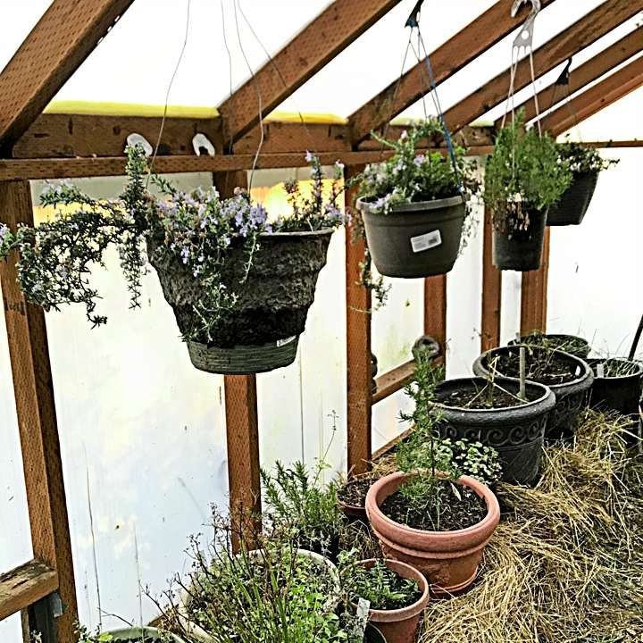 Hanging pots and mulch on beds