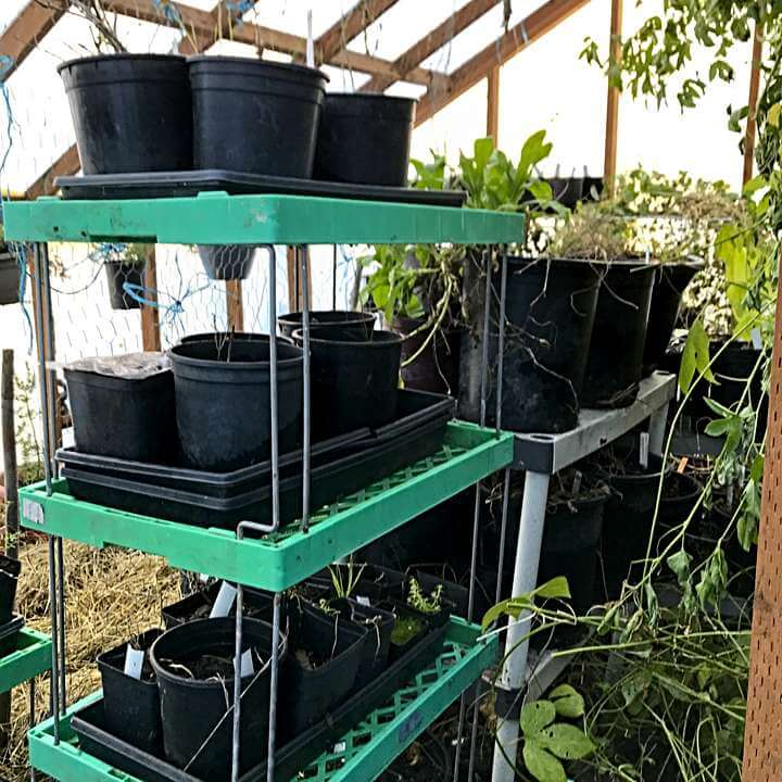 Pots on shelves: take advantage of space