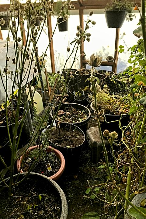 Crowded greenhouse - good grief!