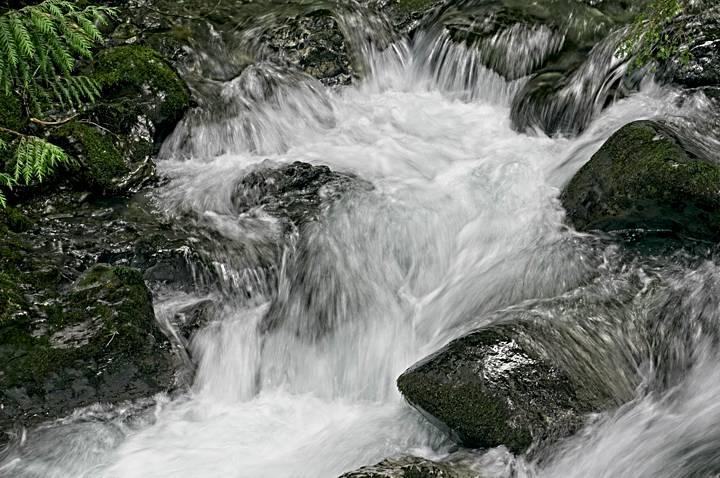 Rushing Water, Quinault Rainforest