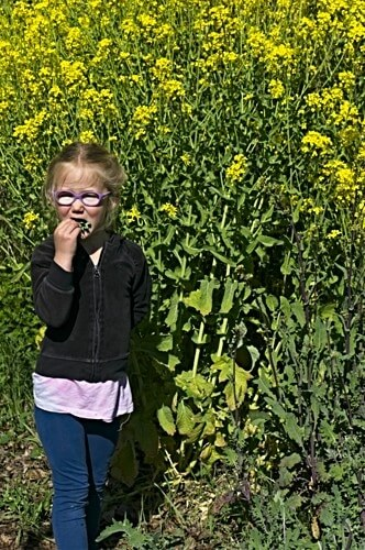 Brassica Flowers grow tall and are tasty!