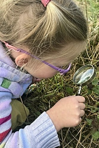 Looking for Soil Creatures