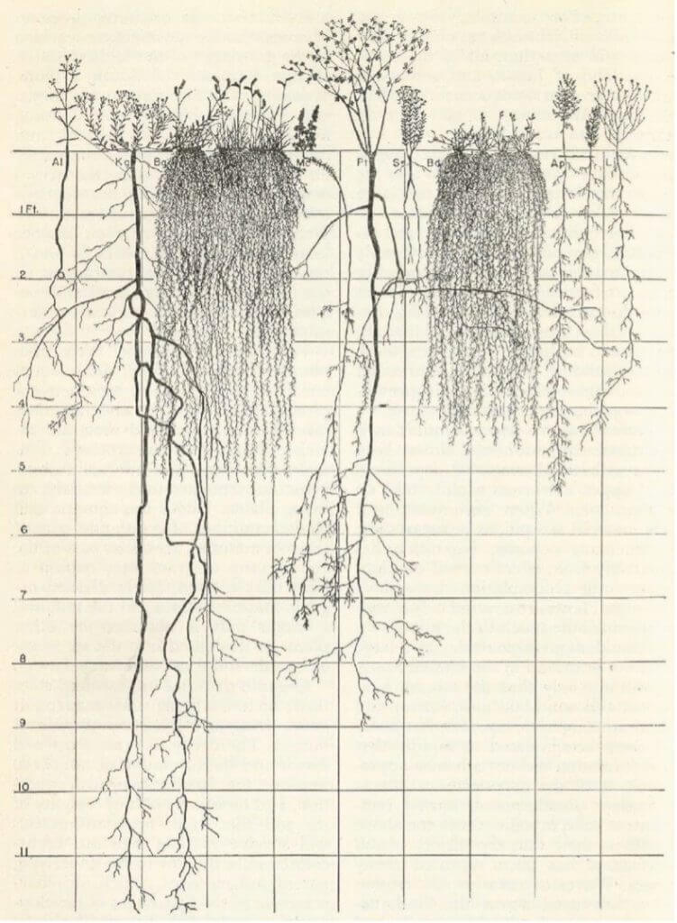 Profile of roots beneath the soil by the USDA NRCS