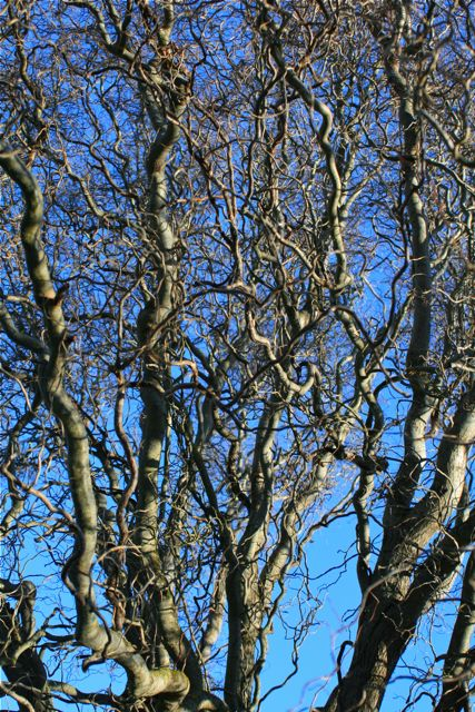 Not a reflection - it's the willow tree, reaching for the blue sky