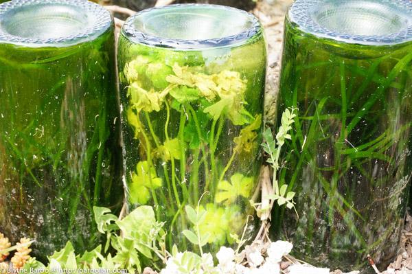 Plants growing inside bottle in Sedum Spiral