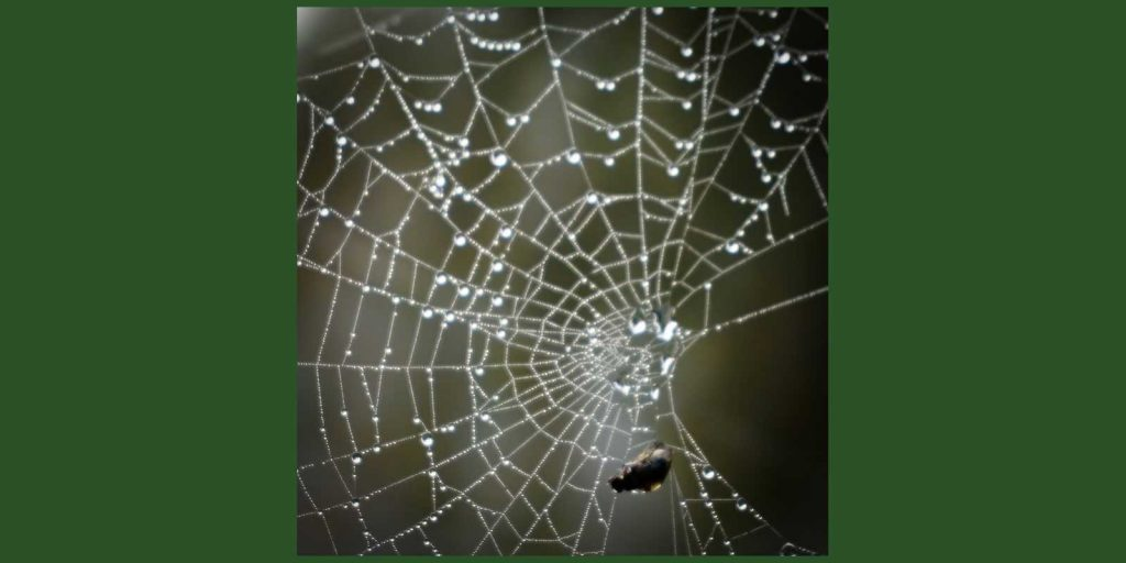 spiderweb caught a fly