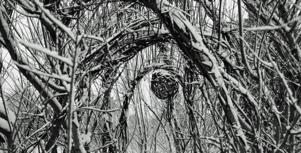willow winter