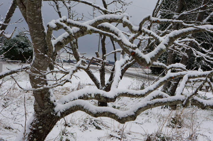 Naked Winter Branches in the Apple Orchard