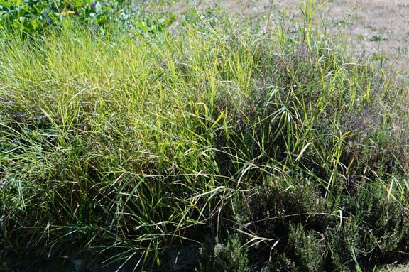 Grassy spiral garden