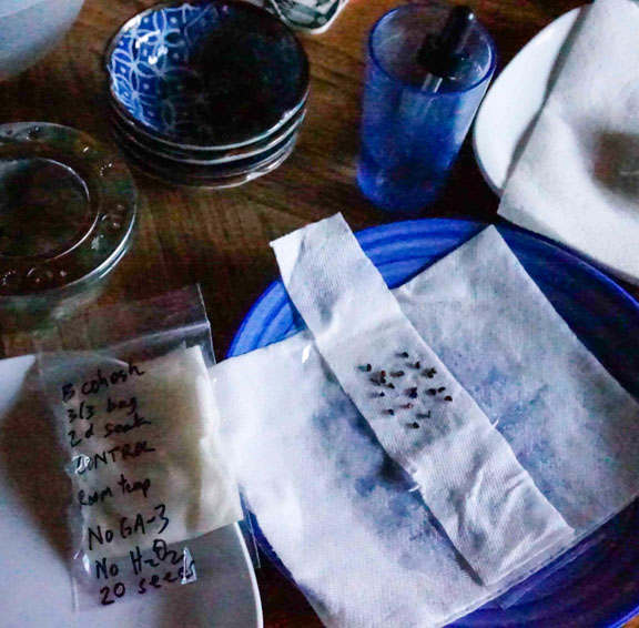 Seed Germination Experiment