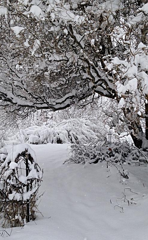 Record-breaking snowstorm in February!