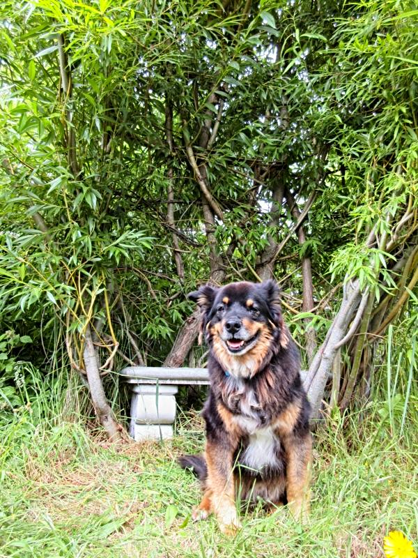 Barkley by willow bench - sense of place, duty, and responsibility