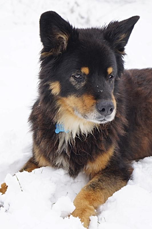 Barkley in snow - sense of place, in every season
