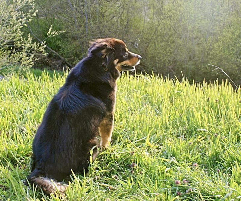 Barkley on hill in sunshine - Sense of Place