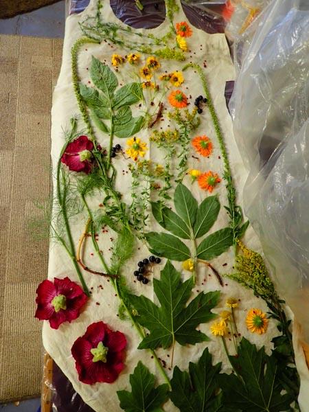 Eco-dye dress; plants on fabric, ready to dye